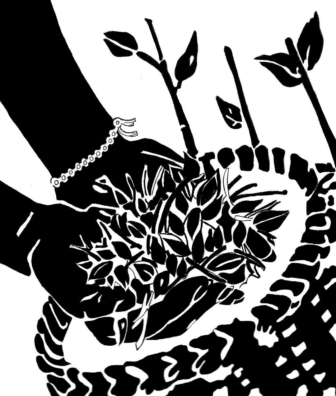 hands holding tea leaves